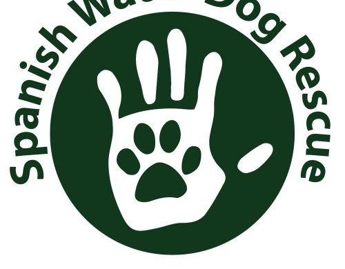 Spanish Water Dog Rescue